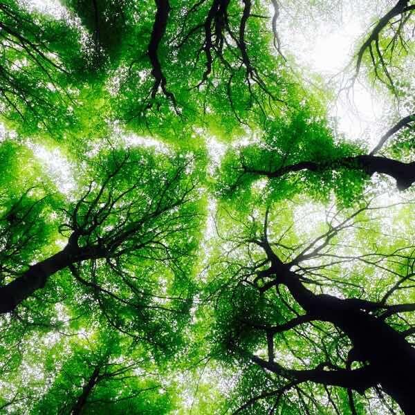 樹々を下から見た画像