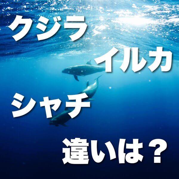 クジラ・イルカ・シャチの違い