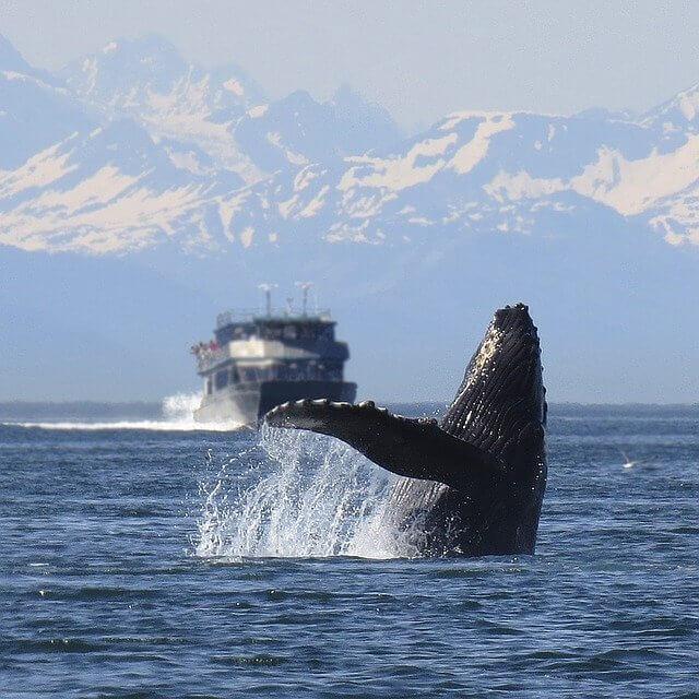 ザトウクジラ画像