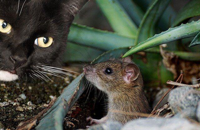 窮鼠猫を噛む画像